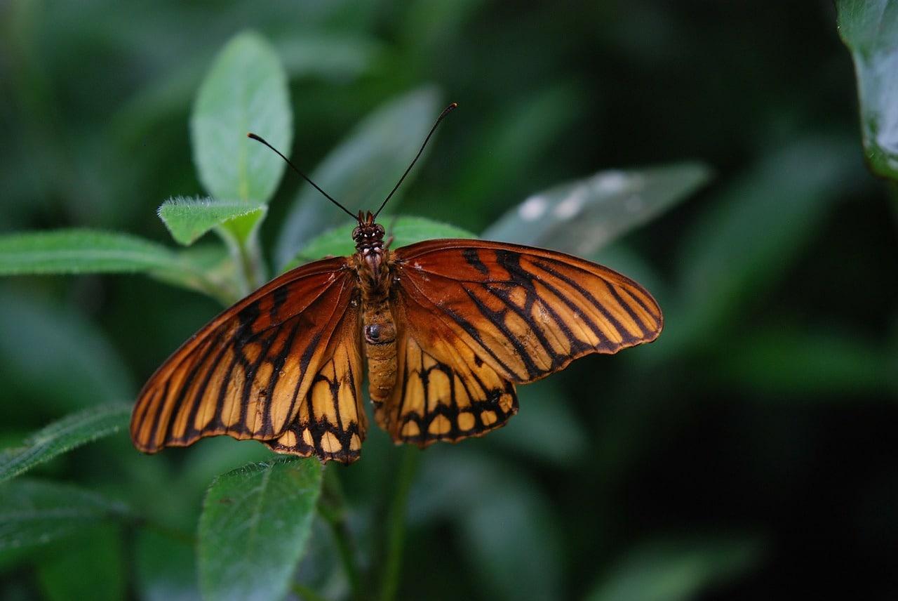 butterfly-22998_1280