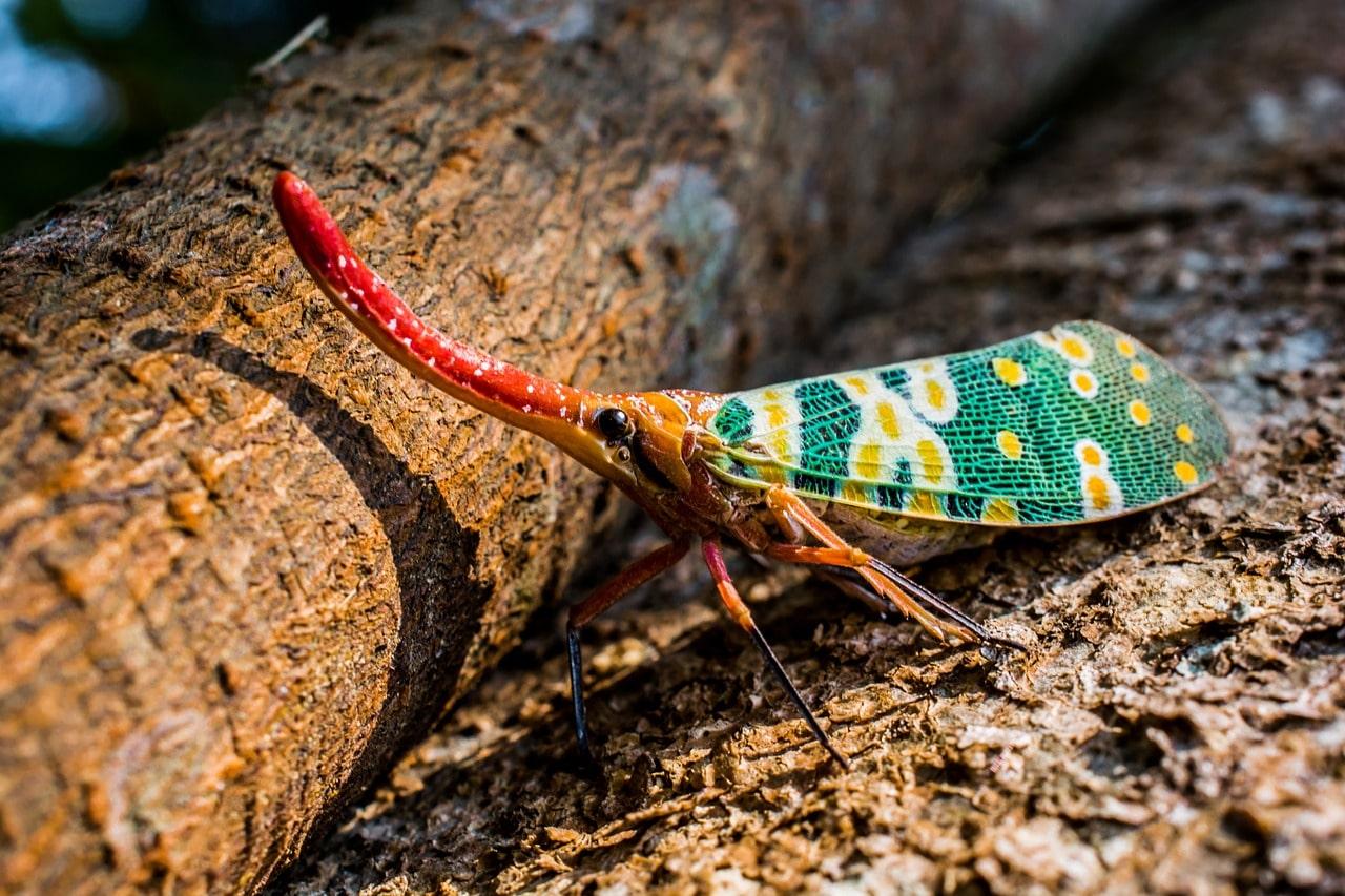canthigaster-cicada-278069_1280